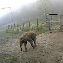 MOBOTIX day/night cameras used at Opel Zoo