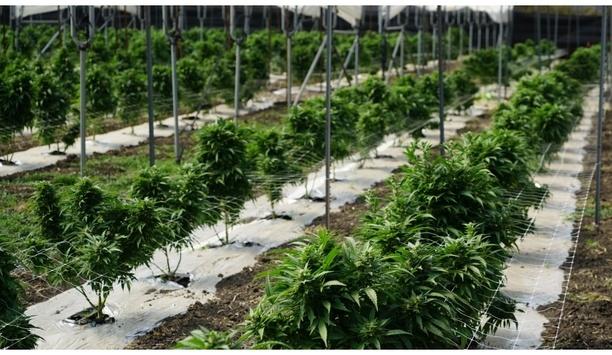 3xLOGIC Infinias Access Control System Secures Las Vegas Marijuana Facility