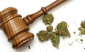Cannabis and Security: The road ahead for the legalisation of recreational marijuana