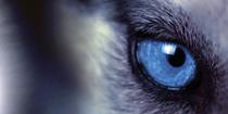 Milestone's mini-website - The Milestone Post provides IP video insights