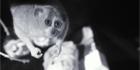 Xvision's HD IP IR CCTV systems used at Bristol Zoo to study animal behaviour