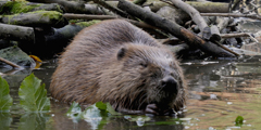 Bosch cameras capture rare beaver footage in demanding conditions