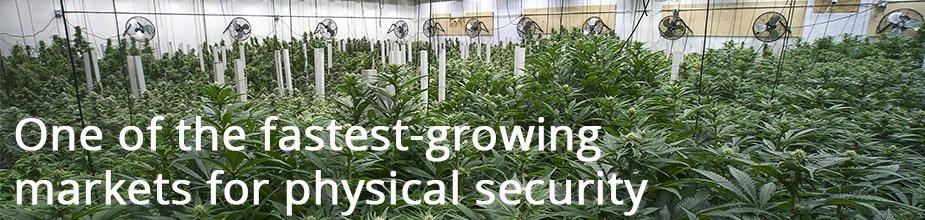 Cannabis and Security